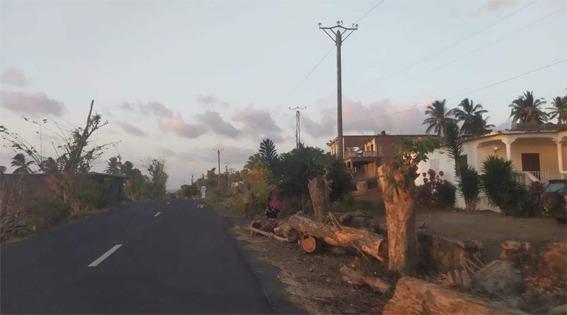 إعادة تأهيل وتوسيع الشبكة الكهربائية في المنطقة الشمالية لنغازيجا، تم قطع مائة شجرة مهددةبالبيئة